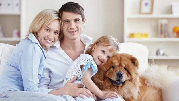 Wills & Trusts dog-young-family Direct Wills Wallend